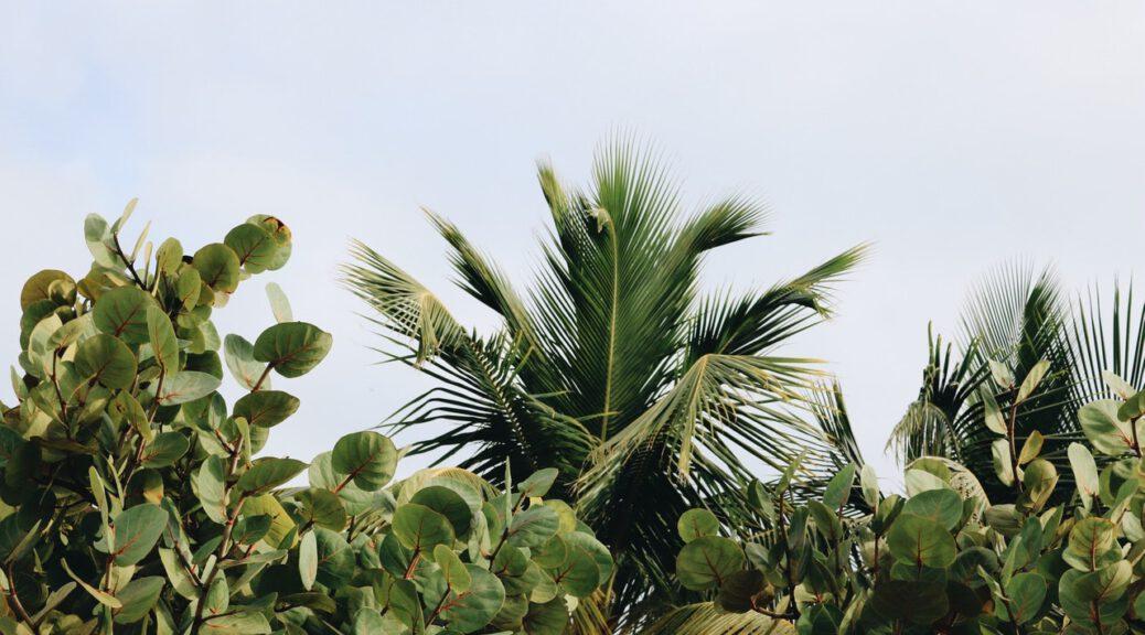 border planten